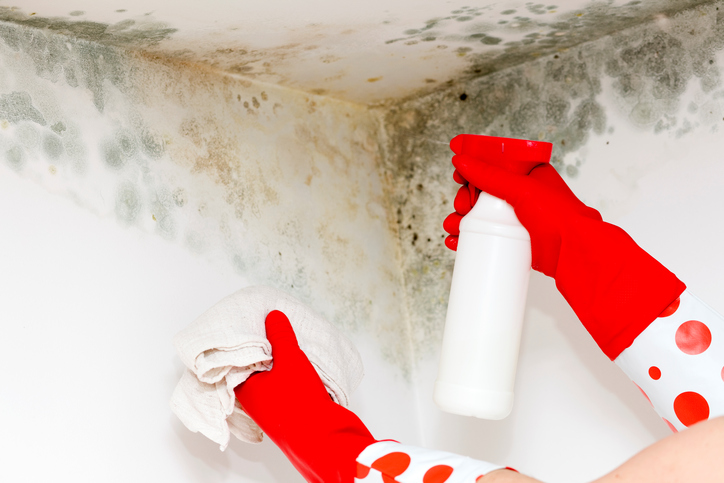 Image of person cleaning fungus on the corner of the wall