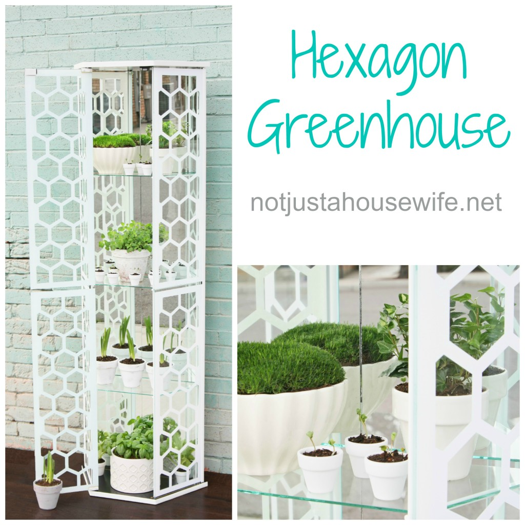 open-hexgon-greenhouse2-1024x10241.jpg
