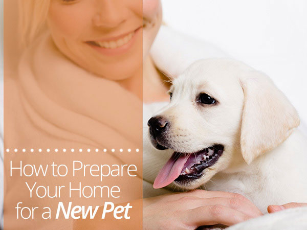 Bringing Fido Home Tips For Pet Proofing Your Home
