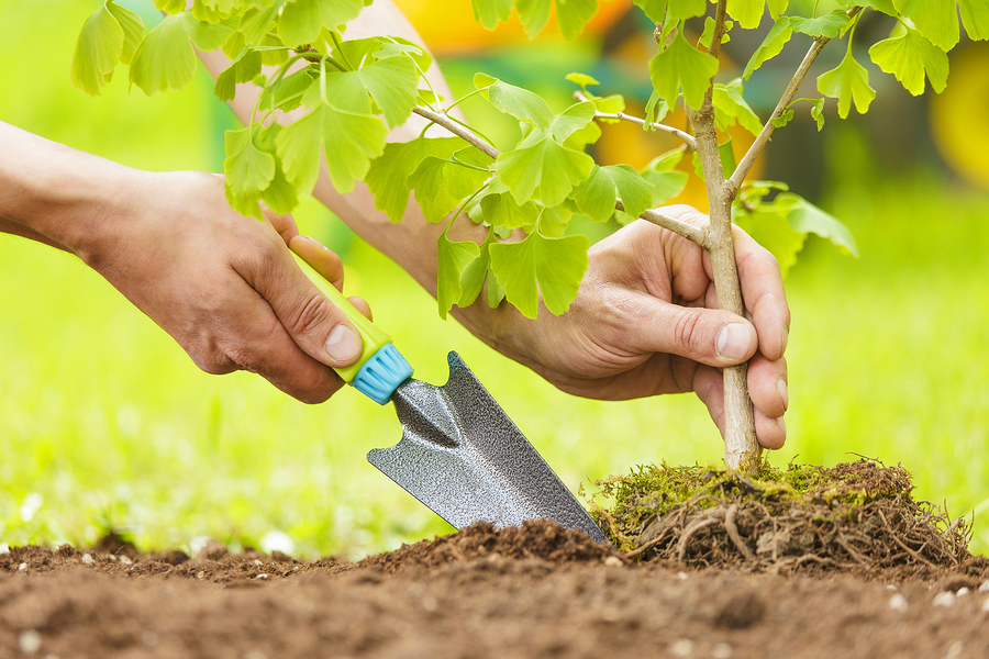 tree planting tips for homeowners