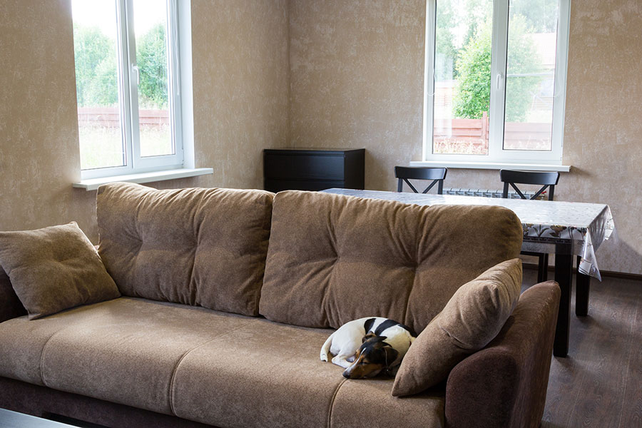 pet-friendly decor: furniture